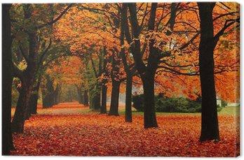 Obraz na Płótnie Czerwony jesienią w parku