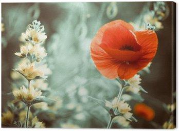 Obraz na Płótnie Czerwony kwiat maku w ogrodzie słońca