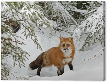 Obraz na Płótnie Czerwony lis