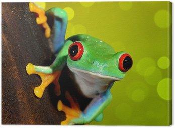 Czerwonych oczu żaba Agalychnis callidryas w terrarium
