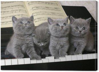 Cztery kociak brytyjski na fortepianie