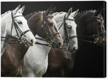 Obraz na Płótnie Cztery konie w konkurencji ujeżdżenia samodzielnie na czarny