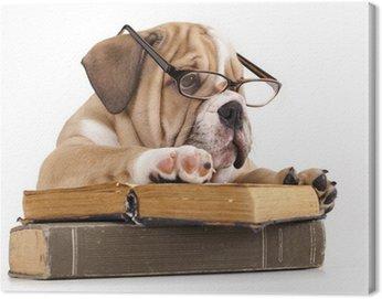 Obraz na Płótnie Czystej krwi Buldog angielski w okulary i książki