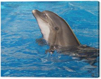 Obraz na Płótnie Delfin