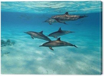 Obraz na Płótnie Delfiny w morzu