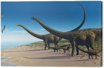 Diplodocus Stado