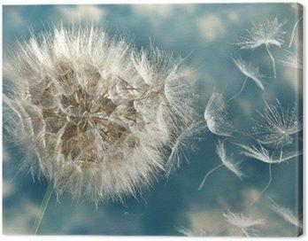 Obraz na Płótnie Dmuchawiec utraty nasion na wietrze