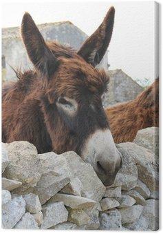 Donkey Ragusa