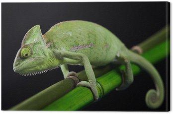 Obraz na Płótnie Dragon, Zielony kameleon