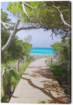 Obraz na Płótnie Droga do plaży Illetas Paradise Beach Formentera