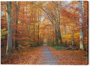 Obraz na Płótnie Droga w lesie jesienią