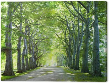 Obraz na Płótnie Droga w lesie