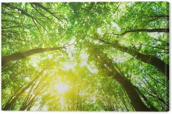 Obraz na Płótnie Drzew leśnych