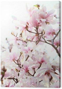 Drzewa magnolii