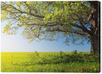 Obraz na Płótnie Drzewo
