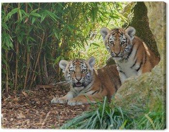 Obraz na Płótnie Dwa Adorable Amur Tiger Cubs Hiding w Shelter
