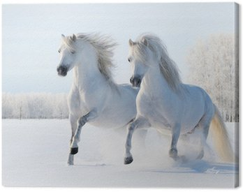 Obraz na Płótnie Dwa białe konie galop na polu śnieg