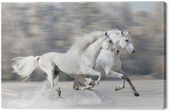 Obraz na Płótnie Dwa białe konie w zimie uruchomić galop