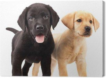 Obraz na Płótnie Dwa cute szczenięta labrador