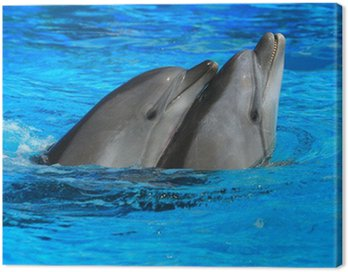 Obraz na Płótnie Dwa delfiny