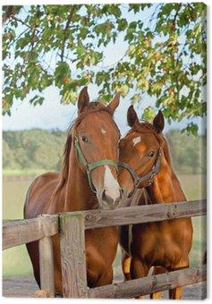 Obraz na Płótnie Dwa konie na padoku