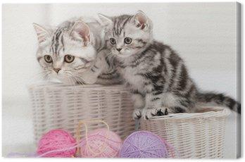 Obraz na Płótnie Dwa koty w koszu z kulkami z przędzy