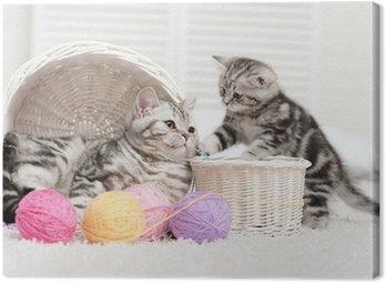 Dwa koty w koszu z kulkami z przędzy