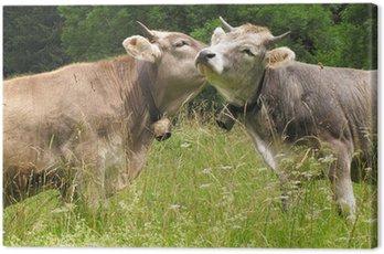 Obraz na Płótnie Dwie krowy przytulić