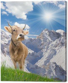 Obraz na Płótnie Dwie krowy