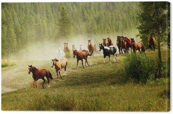 Obraz na Płótnie Działa konie