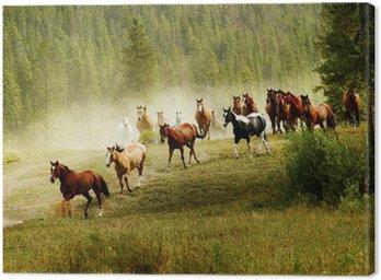 Działa konie