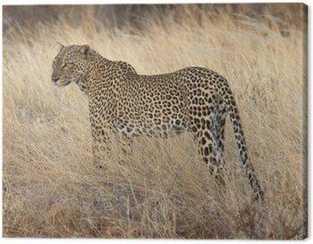 Obraz na Płótnie Dziki leopard stojąc w żółtej trawie