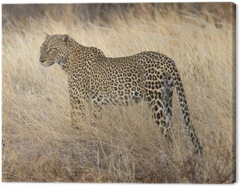 Dziki leopard stojąc w żółtej trawie