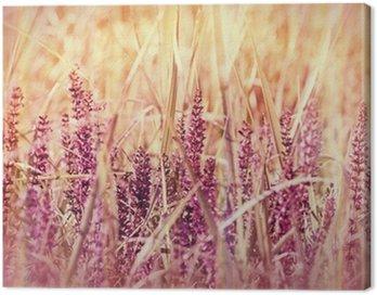 Obraz na Płótnie Dzikie fioletowy kwiat w trawie (wiosna)