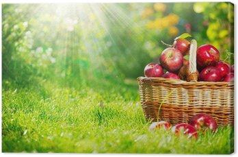 Obraz na Płótnie Ekologicznych jabłek w koszyku. sad. ogród