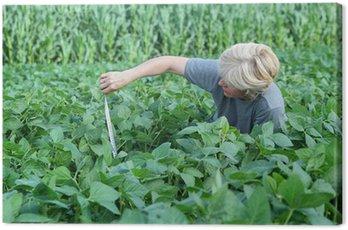 Obraz na Płótnie Ekspert agronomia kontroli jakości soi