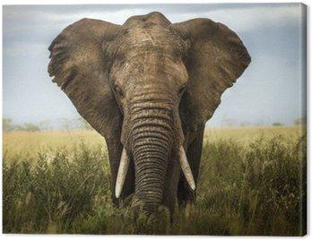 Obraz na Płótnie Elephant background