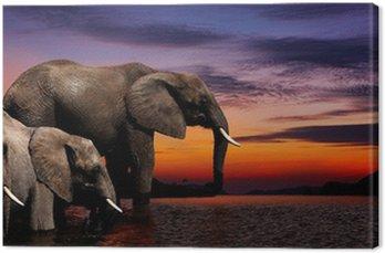Obraz na Płótnie Elephant fantazja