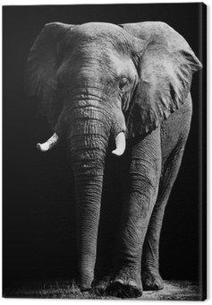 Obraz na Płótnie Elephant samodzielnie na czarnym tle