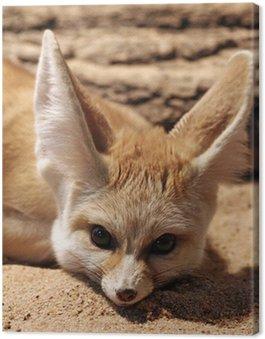 Obraz na Płótnie Fenek (Desert Fox)