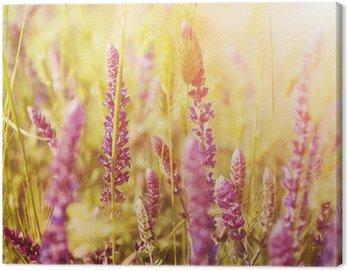 Fioletowy kwiat łąka