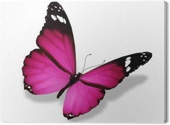 Fioletowy motyl, na białym tle
