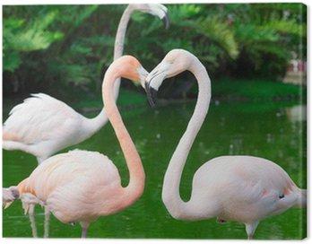 Obraz na Płótnie Flamingi