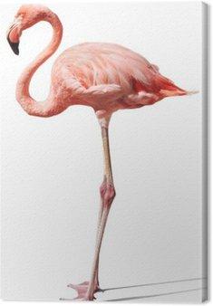 Obraz na Płótnie Flamingo na białym