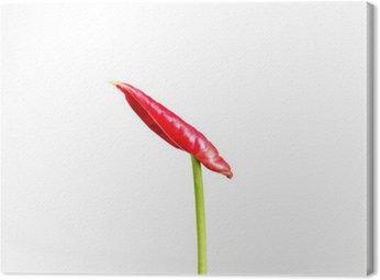 Obraz na Płótnie Flamingo pączek kwiatu