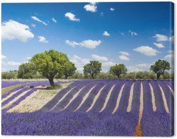 Obraz na Płótnie Francja Prowansja lawendy / Lawendowe pole w Prowansji, Francja