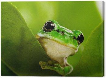 Frog wystającym