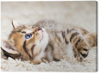 Funny kitten w dywan