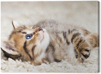 Obraz na Płótnie Funny kitten w dywan