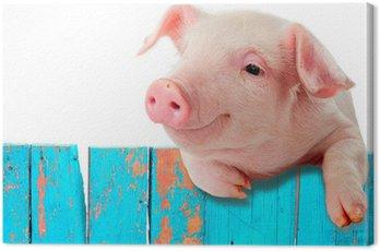 Obraz na Płótnie Funny pig wiszący na płocie. Samodzielnie na białym tle.